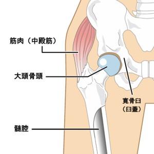 足 の 付け根 内側 痛い 足の付け根が痛いとき、その原因とタイプ別の治し方のコツを解説